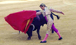 bull fighting photo